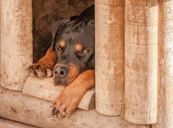 niche chien