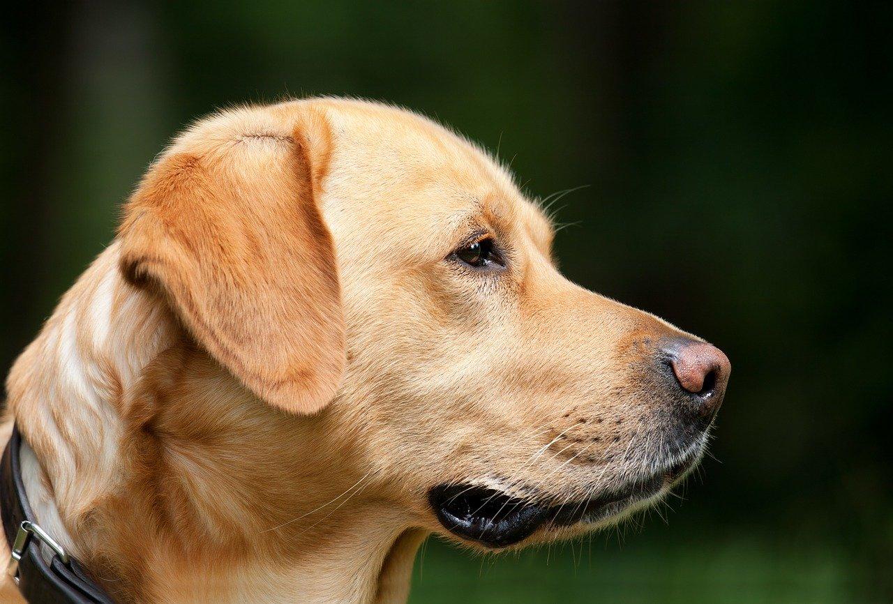 Avoir un chien comme un animal de compagnie.
