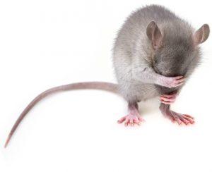 COmparatif pieges a souris