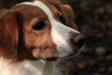 Faire appel à un soigneur animalier de temps à autre pour votre chien.